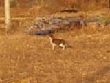 潭陽近くの旧光州線跡地を歩いていた猫